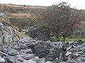 A run of dressers' sheds above the lower pit of Caermeinciau - geograph.org.uk - 315180.jpg