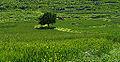 A wheat field, Aladağ, Adana.jpg
