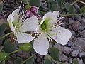 Ab plant 104.jpg