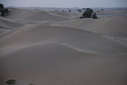 The desert with limited vegetation near Al-Khaznah, between the cities of Al Ain and Abu Dhabi, roughly in the region of Ar-Rub' Al-Khali (The Empty Quarter)