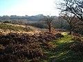 Access land beside the Tavy - geograph.org.uk - 298118.jpg