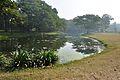 Acharya Jagadish Chandra Bose Indian Botanic Garden - Howrah 2011-01-08 9726.JPG