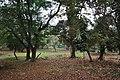 Acharya Jagadish Chandra Bose Indian Botanic Garden - Howrah 2011-02-20 1542.JPG