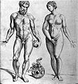 "Adam and Eve,""Compendiosa totius anatomiae delineatio"", Wellcome L0002872.jpg"