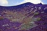 Aetna-146-Pionierpflanzen im Krater-1986-gje.jpg