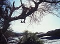 Ahaggar Mountains 1981 72.jpg