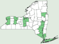 Ailanthus altissima NY-dist-map.png