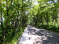 Akita Prefectural Road 38 at lakeside of Tazawako 01.jpg