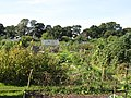 Allotments south of Forsyth Road (2) - geograph.org.uk - 1568118.jpg