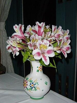 Alstroemeria - An Alstroemeria cultivar