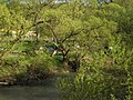 Alte Bäume am Lahnufer nahe Jugendherberge im Frühling, Fahrrad auf Lahntalradweg, Übungsbetrieb auf Universitätssportplatz am Trojedamm Marburg, 2018-04-18.jpg