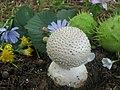 Amanita echinocephala (Vittad.) Quél. (15192464565).jpg