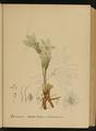 American Medicinal Plants-1-0019.png