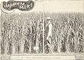 American farmers' manual (1903) (17499496103).jpg