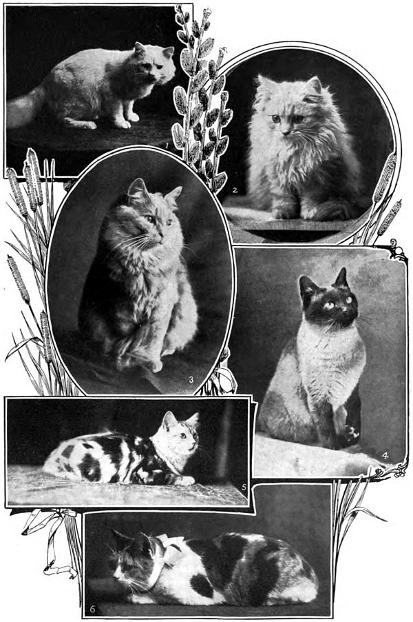 Americana 1920 Cat Domestic (2).jpg