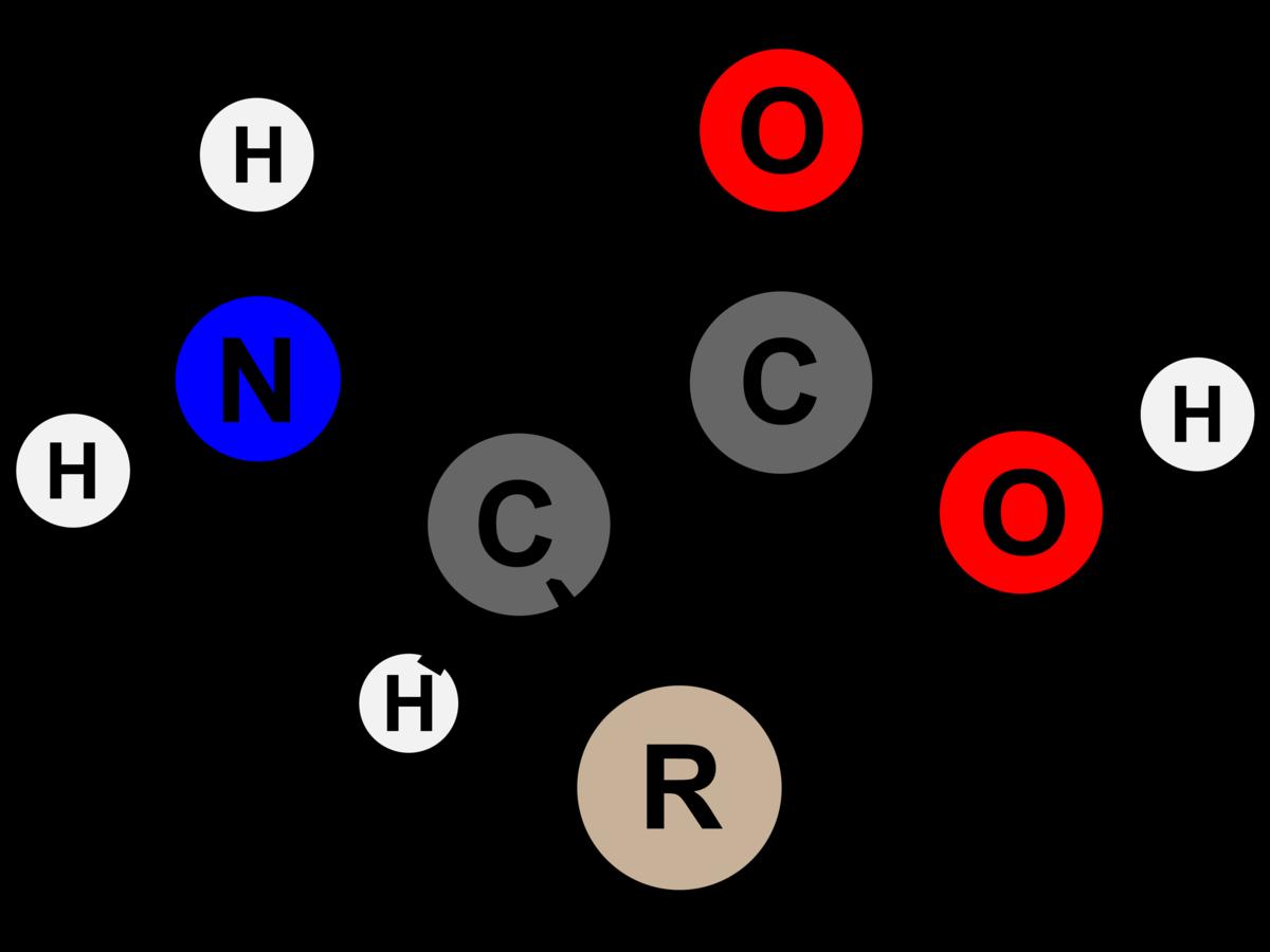 Amino acid - Wikipedia