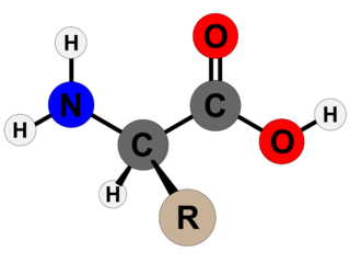 Amino acid Organic compounds containing amine and carboxylic groups