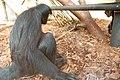 Amsterdam Zoo (3799357794).jpg