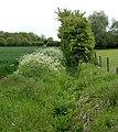 An overgrown ditch, Broadwell - geograph.org.uk - 1313926.jpg