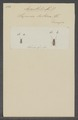 Anaesthetis - Print - Iconographia Zoologica - Special Collections University of Amsterdam - UBAINV0274 034 19 0005.tif