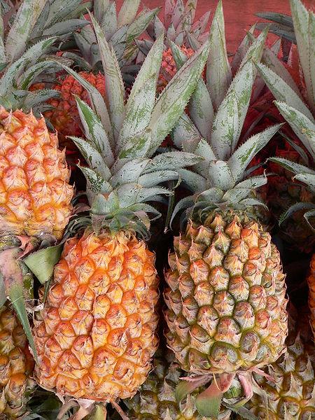 Fichier:Ananas comosus Victoria P1190421.jpg