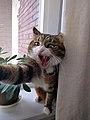 Angry cat by Juliet van Ree.jpg