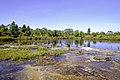 Anodard Pond - Phu Kradueng National Park 06.jpg