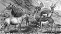 Antiloper I, Nordisk familjebok.png