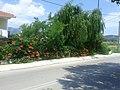 Apollonii, Greece - panoramio (6).jpg