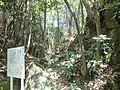 Aratakiyama Castle Horikiri01.JPG