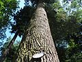 Arboretum Bukovina 456.jpg