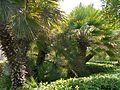 Arboretum Trsteno 03.jpg