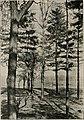 Arboriculture (19724837666).jpg