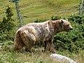 Arosa - bear 2.jpg