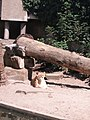 Artis, Zoo, Dierentuin - panoramio (16).jpg