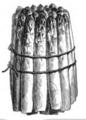 Asperge de Hollande Vilmorin-Andrieux 1883.png