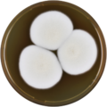 Aspergillus ferenczii meaox.png