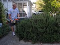 Attacking The Rosemary (7114510673).jpg