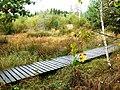 Ausgetrockneter Birkensee - panoramio.jpg