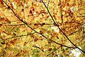 Autum leaves wallpaper.jpg