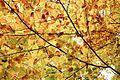 Autum leaves wallpaper.jpg