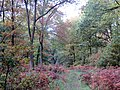 Autumn Ride - Savernake - Nov 2012 - panoramio.jpg