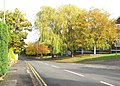 Autumn colour at Hanging Hill Lane, Hutton - geograph.org.uk - 1198529.jpg