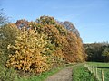 Autumnal Oaks - geograph.org.uk - 281914.jpg