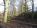 Avenue of trees - geograph.org.uk - 657403.jpg