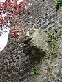 Avranches - Donjon (Gargouille).JPG