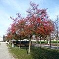 Bad Birnbach, Kurallee im Herbst, 1.jpeg