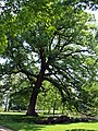 Baden Sightseeing-Tour, Parkanlage Schloß Favorite bei Förch - Rastatt - panoramio (1).jpg