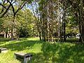 Bamboos and grass in Hakozaki Campus, Kyushu University.JPG