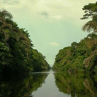 Rio Negro-Rio San Sun mangroves